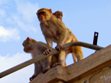 Rebel Monkeys: Escaping the Monkey Catcher