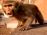 Rebel Monkeys: Monkey Gang Turf War