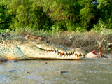 Av-401-600: Croc Meals on the Go