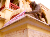 Rebel Monkeys: Trading Places