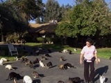 Av-1201-1400: The Lady with 700 Cats