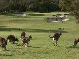 Kangaroo Golf Club
